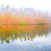 Fall mist panorama
