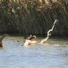 Ducks sleeping on a log.  Spider web highlighted by sunlight.