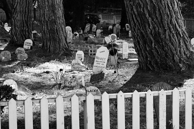 Presido of San Francisco Pet Cemetery