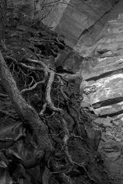 Wall & Trees