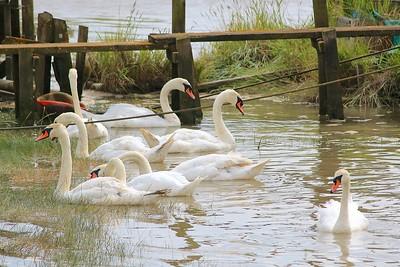 Swan Pen