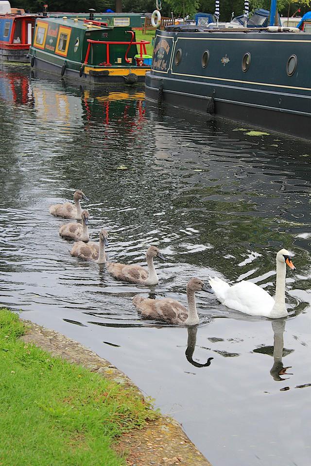 Narrow Swans with Narrow Boats