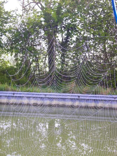 Canal Cobweb 1