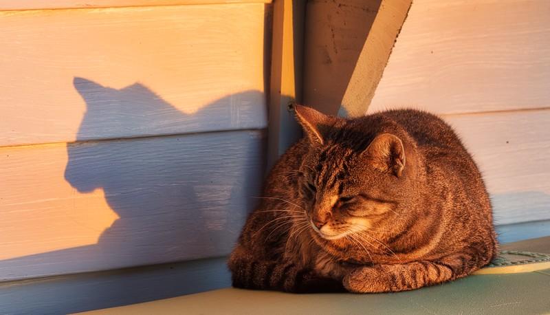 Marina - Shipyard Cat