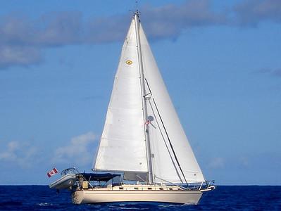 Bonanza Under Sail