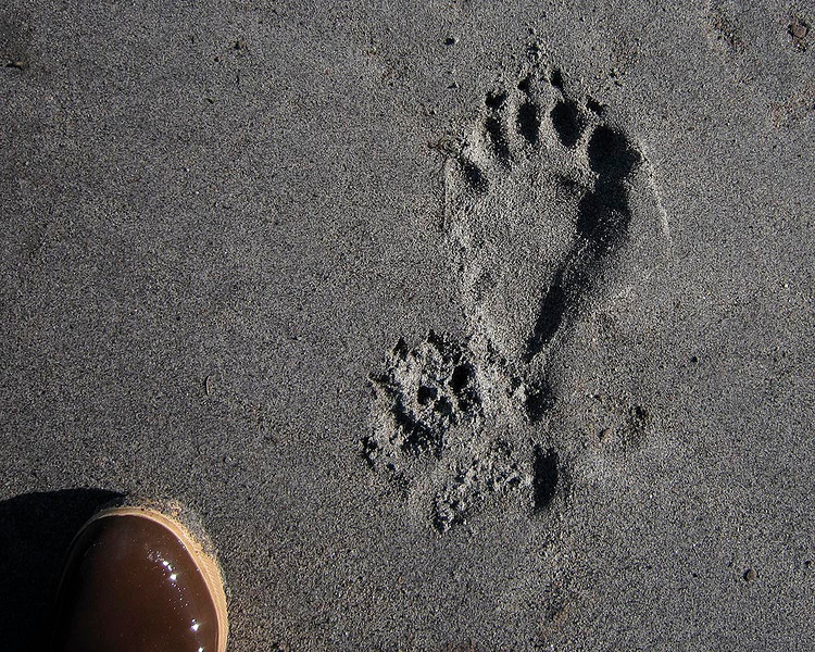 Black Bear track.