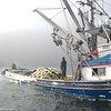 Alaska Fishing Boats : Alaska seining boats in Kitoi Bay, Kodiak, AK
