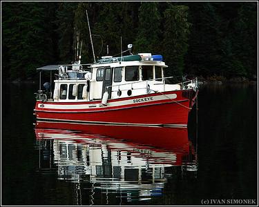 """SOCKEYE"",Anan Bay,Alaska,USA."