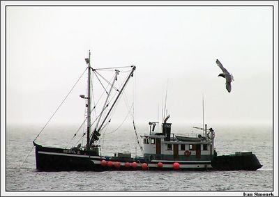 """BERYL E. "" and a seagull, near Wrangell, Alaska, USA.-----""BERYL E."" a morsky racek v blizkosti Wrangellu, Aljaska, USA."