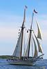 The Shooner American Eagle under sail, The schooner Heritage - Windjammer Days, Boothbay Harbor, Maine 2008
