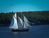 Two masted schooner under sail in Small Point Harbor, Casco Bay, Phippsburg Maine. That's a sea gull flying just to aft of the boat and Hermit Island in the background. Summer in Maine!