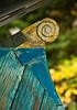 "rudder board detail from ""Aries"" sloop in Bath Maine"