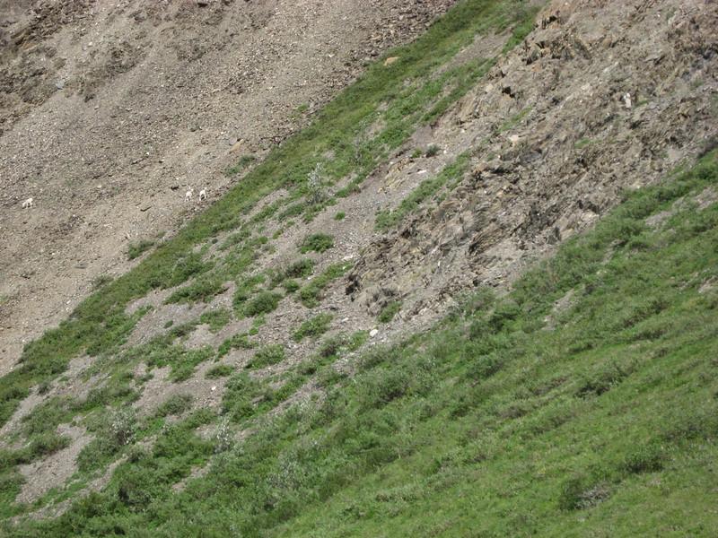 BC08_04_068_KPm - sheep moving across the hill