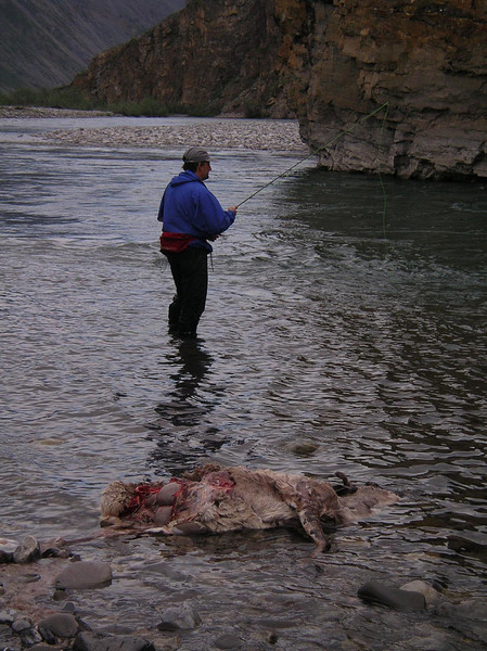 David fishing next to a wolf killed caribou
