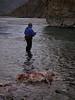 David fishing next to a wolf killed caribou