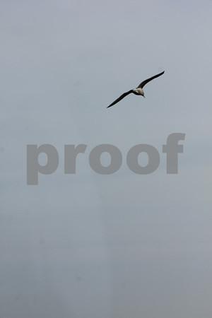Free bird  copyrt 2014 m burgess