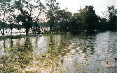 The Corsica overflows its banks during Hurricane Isabel, 2003.  River R Us.