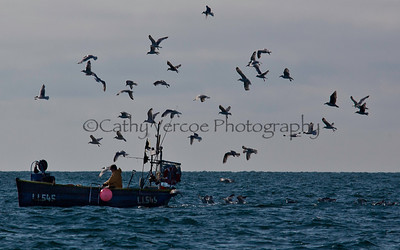 A fishing boat attracts a flock of seagulls