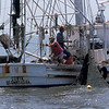 Shrimp Boats of the Golden Isles - Cobia