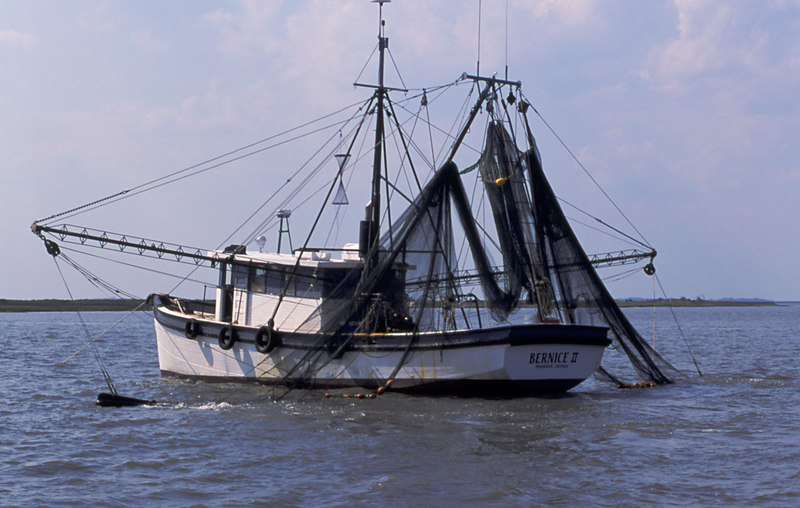 Shrimp Boats of the Golden Isles - Bernice II