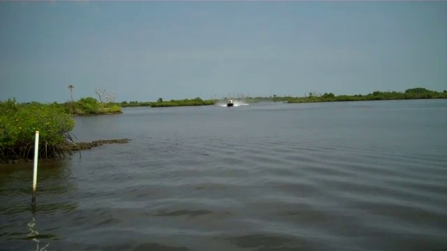 """Airboat Drive By - Courtesy of  <a href=""""http://WWW.blewbyuairboattours.com"""">http://WWW.blewbyuairboattours.com</a>  in Homosassa,Florida"""