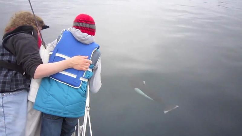 Jacki Cade Porpoises