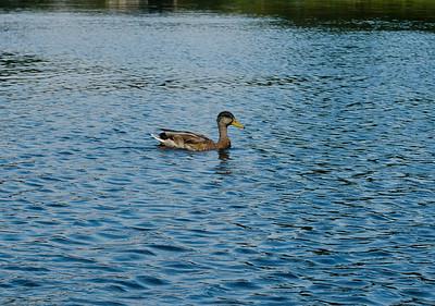 Jake and I at Cass Lake Sept 25-3155