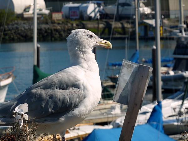 Joe Todd Randy Boating Sea Doo Lk Washington Sep 2010 004