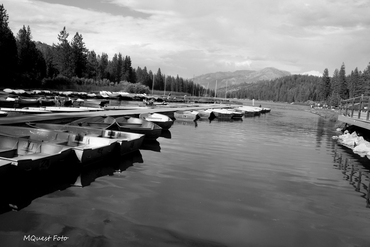 The ladies of the of the Lake - Hume Lake Sequoia