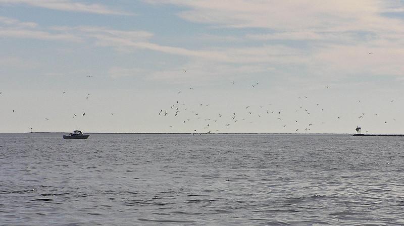 November 14, 2010, bluefish action
