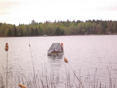 Loons on raft