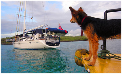 A friendly street dog, fond of riding the harbor water taxi, eyes a new arrival.  San Cristobal, Galapagos.