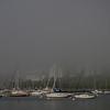 Foggy McKinley Marina