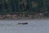 Open canoe on the Moose River.