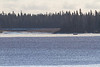 Taxi boat making its way through drifting ice at the mouth of the Gutway leading to Moose Factory.