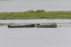Retrieving a loose canoe on a Saturday morning in Moosonee.