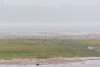 Looking across thge sandbar in the rain.
