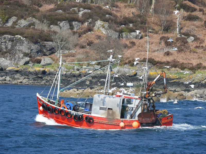 Fishing vessel arriving at Tarbert.<br /> 17th April 2009.