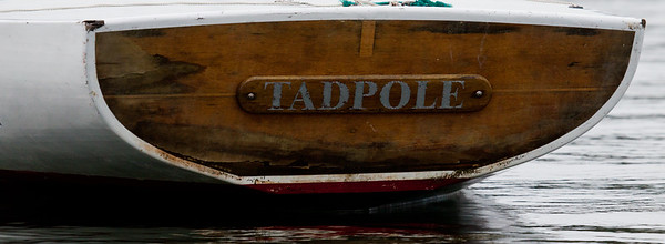 "stern board of sailboat, ""Tadpole"", brightwork,  photograph, image, photography, Vacationland, sailing race, Small Point Sailing Club"