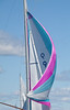 Small Point One Design spinnaker pink and turquoise # 9, Maine sailing competition, photograph, image, photography, Vacationland, sailing race, Small Point Sailing Club