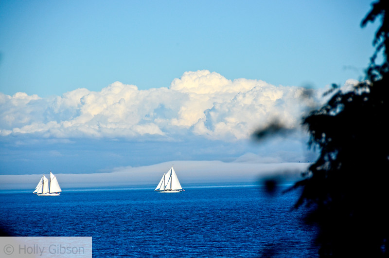 Sailboats - Port Townsend, Washington - 67