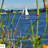 Sailboat and stalks - 32