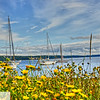 Sailboats - Port Townsend, WA - 62