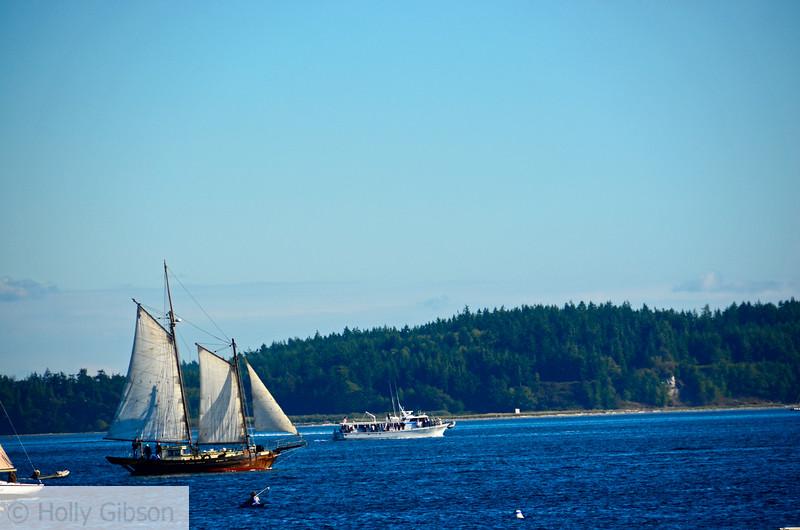 Sailboats - Port Townsend, Washington - 66