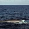 The same Whale.