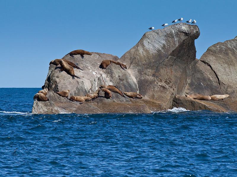 IMG_1524  No Name Island at entrance to Resurrection Bay.