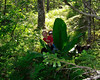 ps_1234  Bobbi and Ian hide behind the Skunk Cabbage, Tonsina Bay