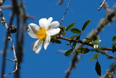 A tree vine blossom.