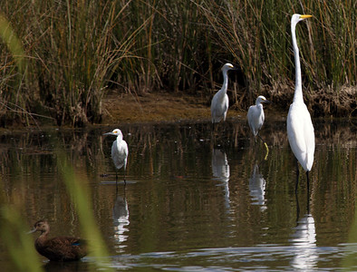 Marshy ponds, rife with birds, dot the land on either side of the Inland Waterway.