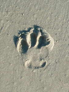 This is Roadie's paw print. He is a rescue dog, who along with his sister Lucie has brought great joy to my life. 10% of the profits from sales from this site will go to Maranatha Farm, the rescue group that works tirelessly to find forever homes for dogs they have rescued. www.maranathafarm.org